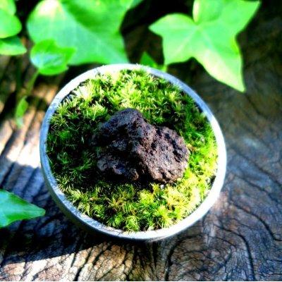 画像1: Sanshu Moss Pot