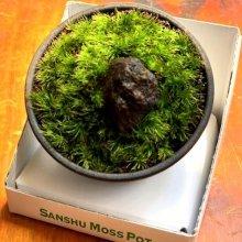 他の写真2: Sanshu Moss Pot  Kit  お得SET